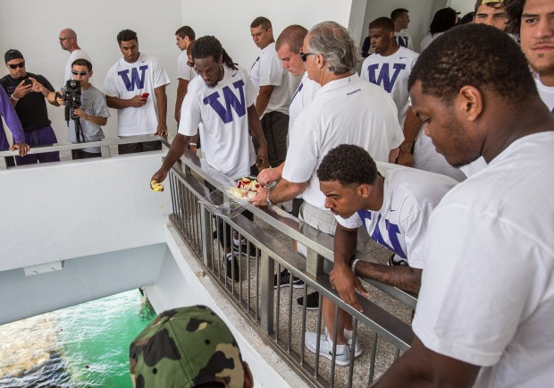 Washington players take turns tosses flower petals into the waters above the USS Arizona at the Pearl Harbor Memorial Friday.  Washington toured the memorial following their final practice before their season opener with Hawaii.