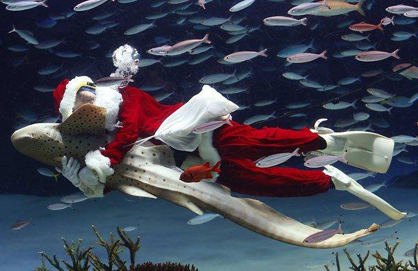 A diver dressed as Santa embraces a An aquarium staff member dressed in a Santa Claus costume embraces a Zebra shark at  the Sunshine International Aquarium in Tokyo, (Shizuo Kambayashi / AP)