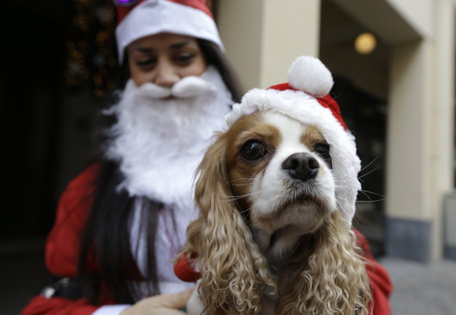 A woman and her dog get ready for a fundraising Santa run in Athens, Greece. (AP Photo/Thanassis Stavrakis)
