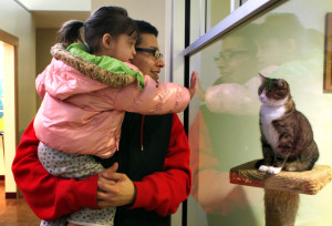 Carlos Ramirez and daughter Delilah, 2, left, look at cats up for adoption at the PAWS Chicago adoption center, the largest no-kill animal shelter in the Midwest. [Antonio Perez/Chicago Tribune/MCT.]