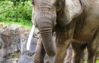 Woodland Park Zoo elephant Watoto unexpectedly died on Friday.
