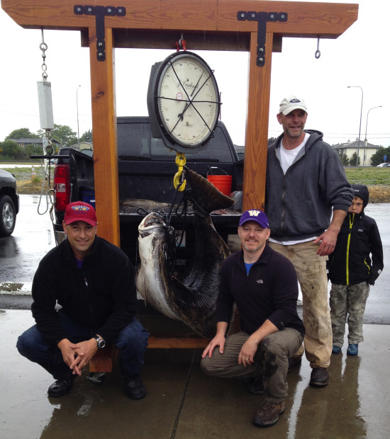 The big fish is weighed in Burlington: From left to right are anglers, Ross Metcalf, Jason Meyers and Jeff Thomas. Click photo to enlarge. (Courtesy Jeff Thomas and Ross Metcalf)