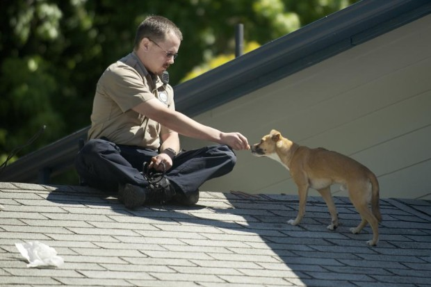 Clark County Animal Control officer Patrick Higbie coaxes Brownie with food Monday after he was discovered on the roof of a house. (Troy Wayrynen / The Associated Press)